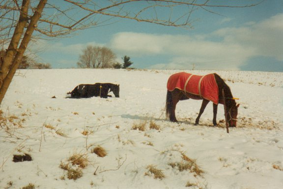 Candy and Big, Red Lion PA farm,1992