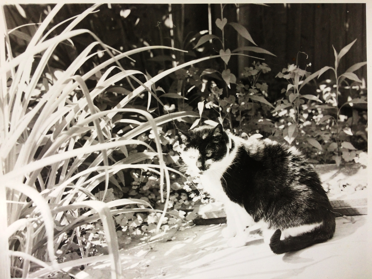 Elizabeth in the garden, Glen Road, Oella, 1989