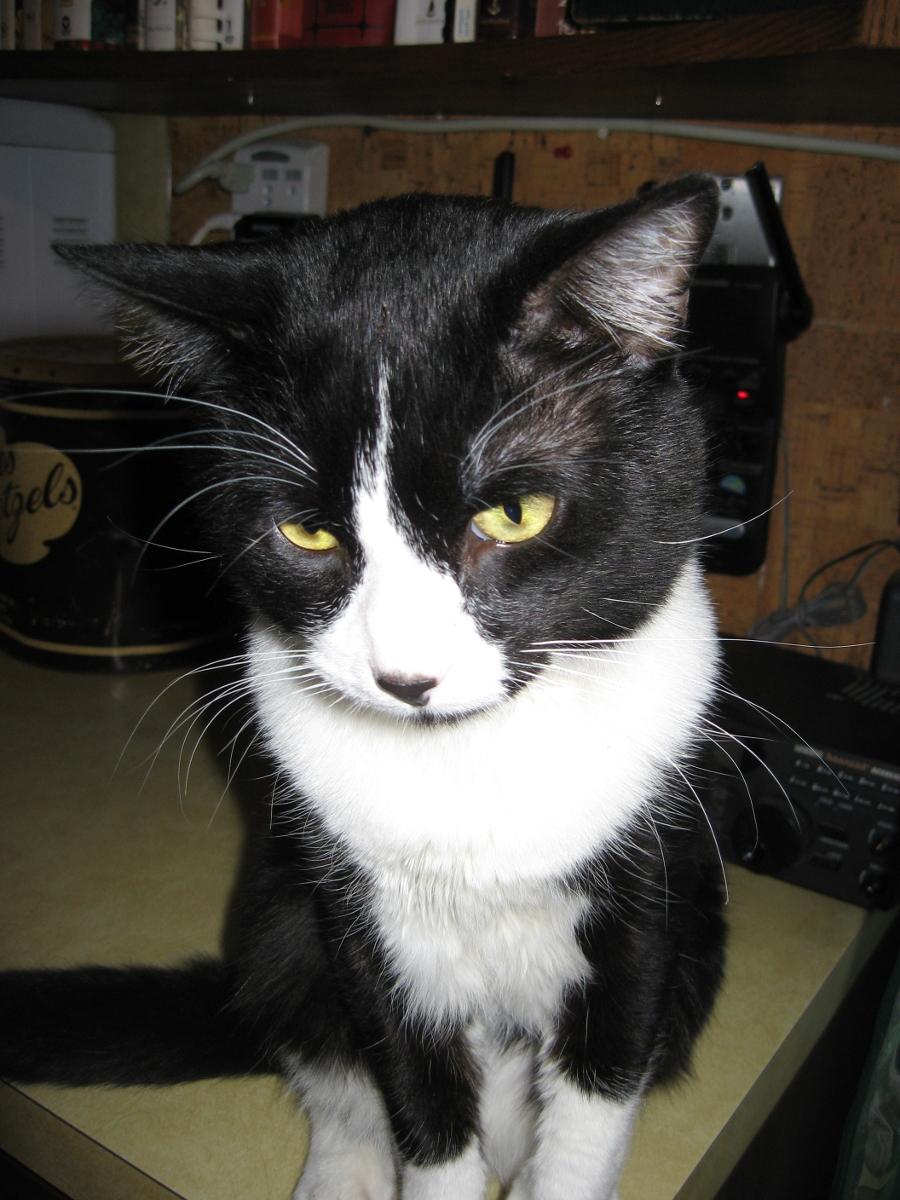 Smitty cat, 2010